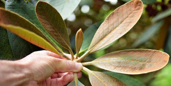 Обработка от болезней и вредителей