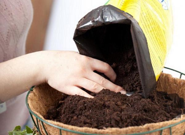Подготовка земли и семян