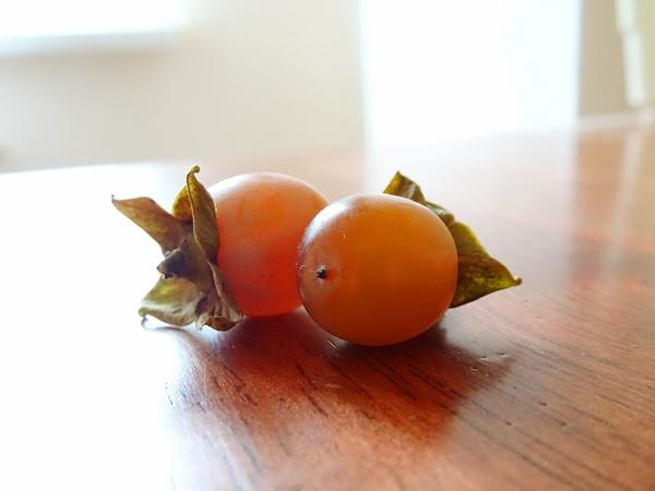 Можно ли дома получить плоды?
