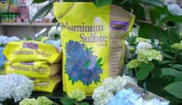 Чем подкормить гортензию осенью. Чем обработать