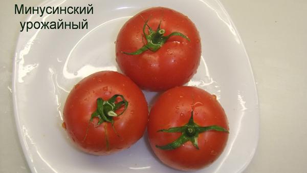 Минусинский урожайный
