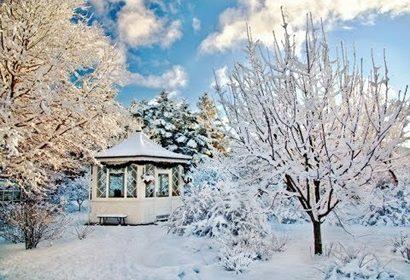 Лунный календарь на январь 2020 для садоводов