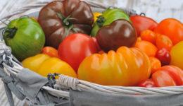 Лучшие сорта томатов для открытого грунта с фото