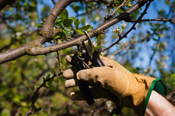 Лунный календарь благоприятных дней для садово-огородных работ за первое полугодие