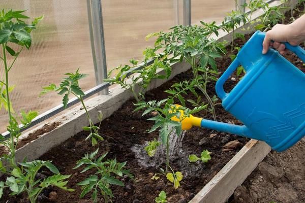 Советы бывалых огородников