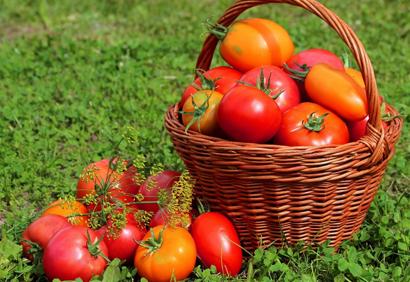 Лучшие томаты 2019 года: самые урожайные сорта для теплицы и открытого грунта с описанием