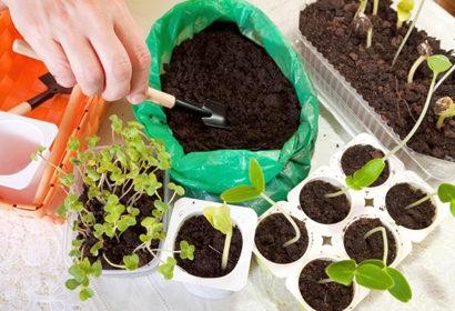 Что сажать на рассаду в январе, феврале. Овощи, цветы