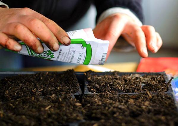 Что можно сажать на рассаду в январе, феврале - овощи