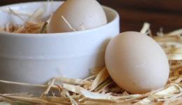 Почему у кур-несушек мягкая скорлупа у яиц. Что делать