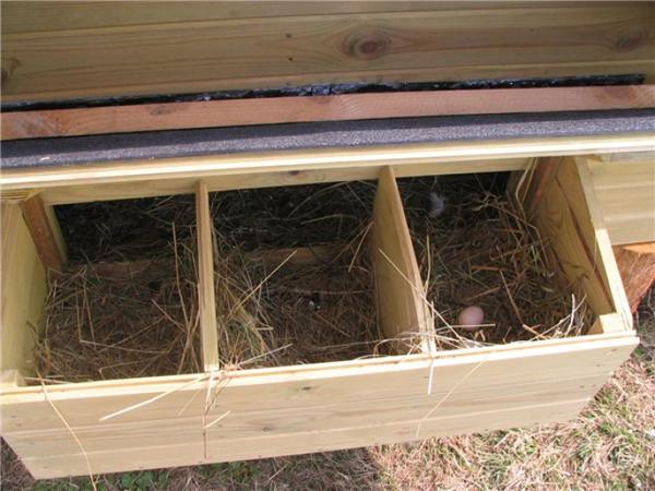 Неудобный гнездовой домик