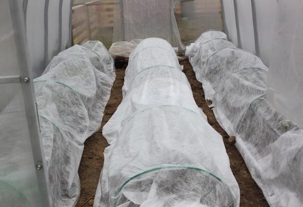 Как спасти помидоры от заморозков в теплице из поликарбоната