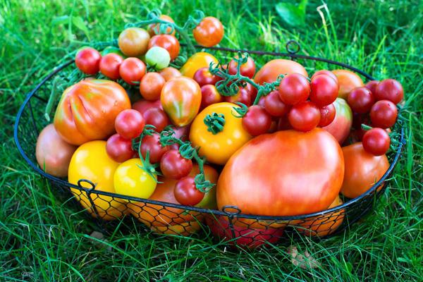 Какие сорта помидоров следует выращивать на Урале
