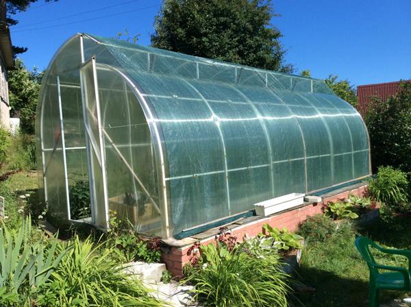 Как спасти томаты от жары в теплице