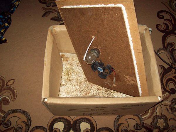 Инкубатор из картонной коробки