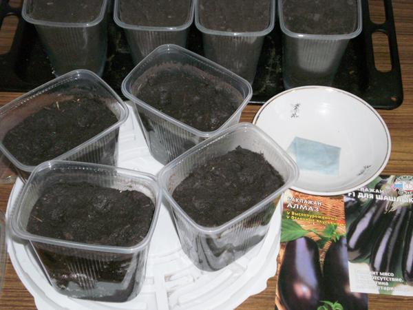 Подготовка почвы и емкостей для посадки баклажанов