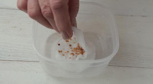 Пошаговая инструкция по подготовке семян баклажанов перед посадкой
