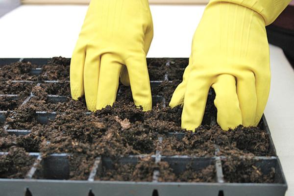 Как сажать рассаду баклажанов