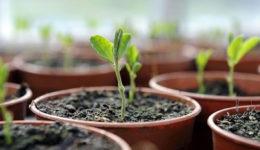 Что сажать в марте на рассаду. Овощи, цветы, по регионам, советы