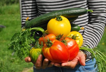 Что можно сажать после помидор севооборот на участке с томатами