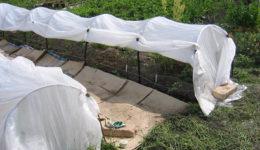 Как защитить помидоры от заморозков в открытом грунте