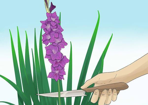 Как правильно срезать цветы
