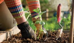 Лунный посевной календарь садоводов, огородников, цветоводов на март 2019 года