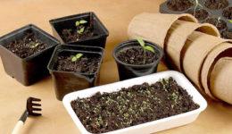 Что посадить в апреле на рассаду Какие овощи, цветы можно сеять в апреле 2019
