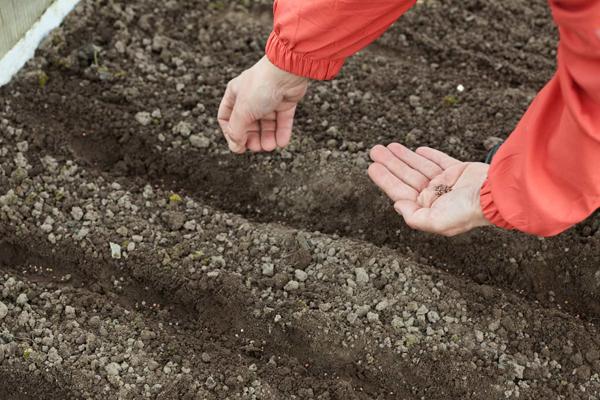 Благоприятные дни для посева и посадки культур