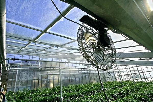 Профилактические меры от возможного перегрева томатов в теплице