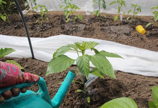 Уход за растениями после формирования