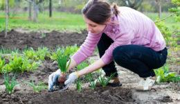Лунный календарь на май 2019 для садоводов. Что делать в мае