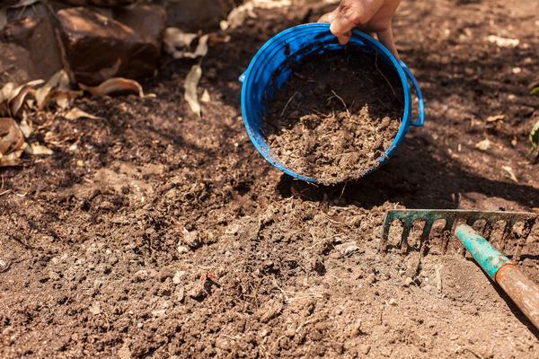 Выбор места и подготовка земли