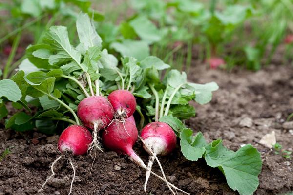 Полезные советы бывалых садоводов
