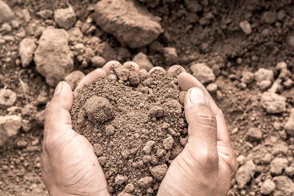Особенности плодородной почвы
