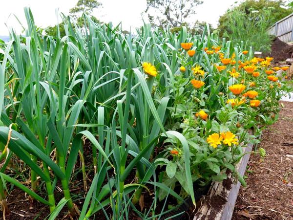 Полезные советы бывалых огородников